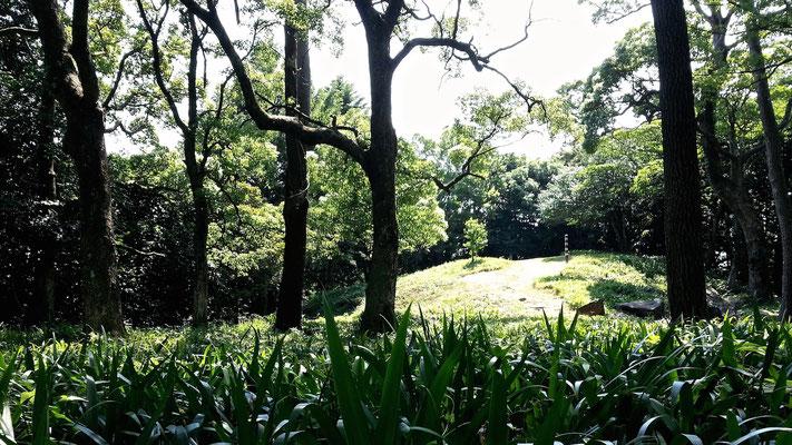 石垣山一夜城歴史公園 天守跡