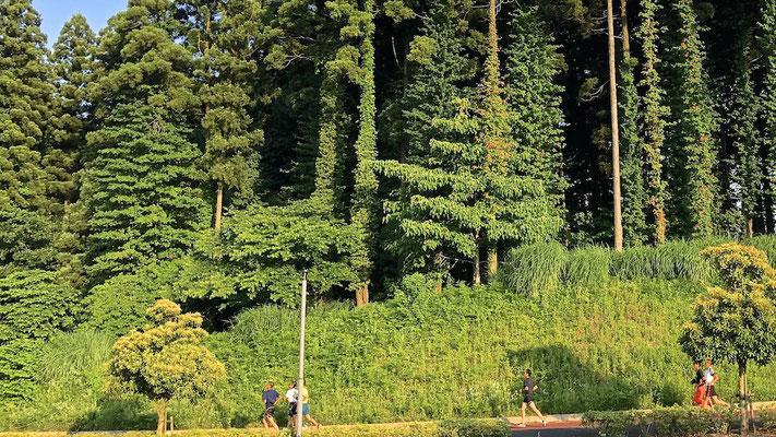 千葉市 昭和の森
