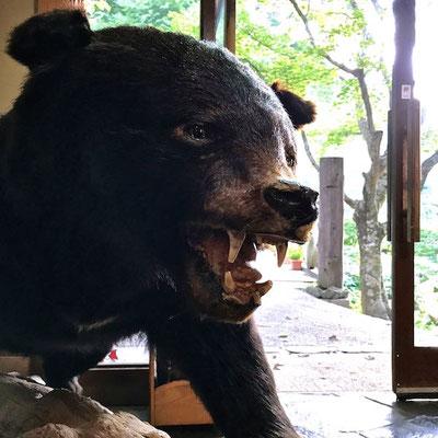 お出迎えのクマ しんざぶろう?
