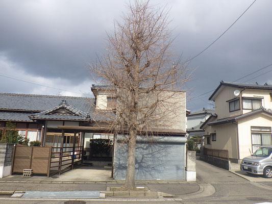 街路樹剪定 施工前