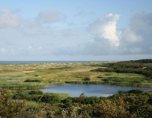 Point de vue sur la Réserve Naturelle de la Baie de Somme