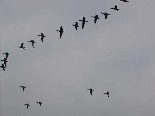 Observer les oiseaux migrateurs au Sillon de Talbert