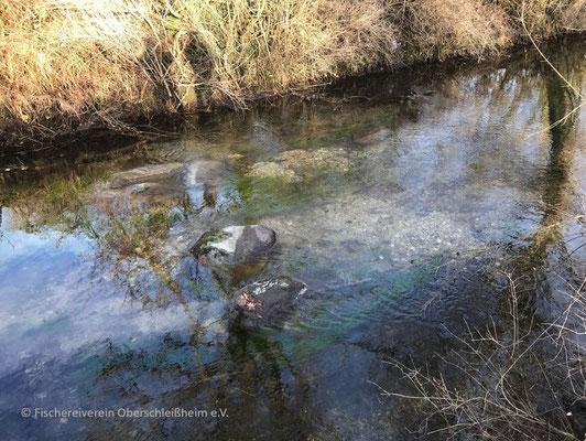 Flusssteine und Wasserpflanzen