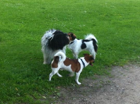 Oh, 2 Neue im Park! Benny und Nörgli sind Brüder.