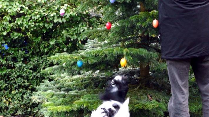 Herrchen hängt Eier in den Baum. Das gelbe Ei ruft danach, ...