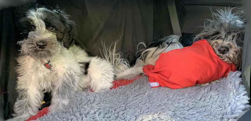 In Herrchens Auto haben wir jetzt auch ein Doppelbett, die Trennwand ist weg. Wir waren zum ersten Mal allein zu Zweit im Auto. Ich habe kaum gebellt, oder?