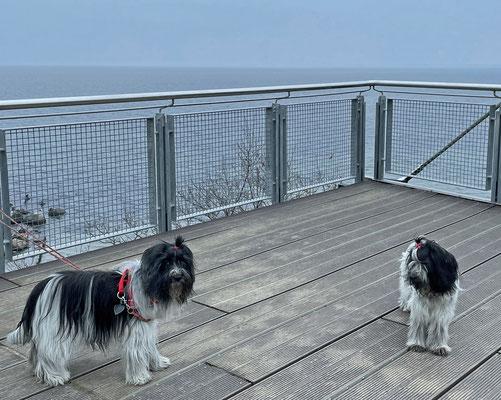 Auf dem Rückweg zum Auto haben wir auf der Steilküste noch eine Aussichtsplattform gefunden.