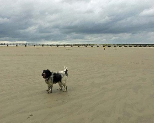... zum Strand gefahren.