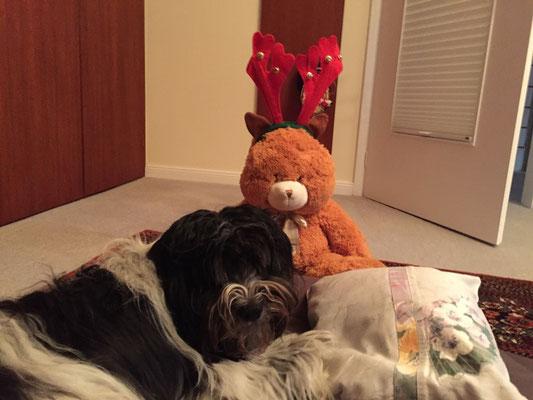 Der erschöpfte Osterhase, der sich hier bei mir erholt, denkt jetzt, er sei ein Elch. Hoffentlich geht  das nach Weihnachten wieder vorbei.
