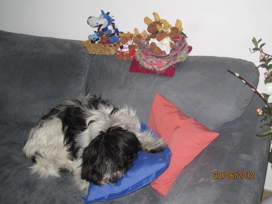 Auf meinem Sofa sitzen einige Stofftiere herum, aber die darf ich nicht zum Spielen nehmen.