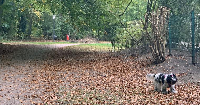 In unserem Park liegen so viele Blätter herum; das ist seltsam, bisher hingen sie an den Bäumen.