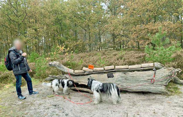 Käsebrot für Zweibeiner bei einer Schlange aus Holz.