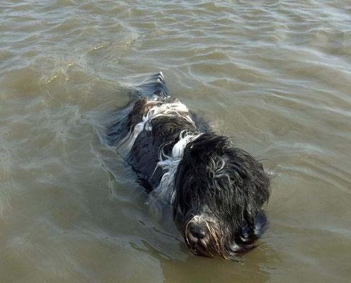 Mal war ich im Wasser ...