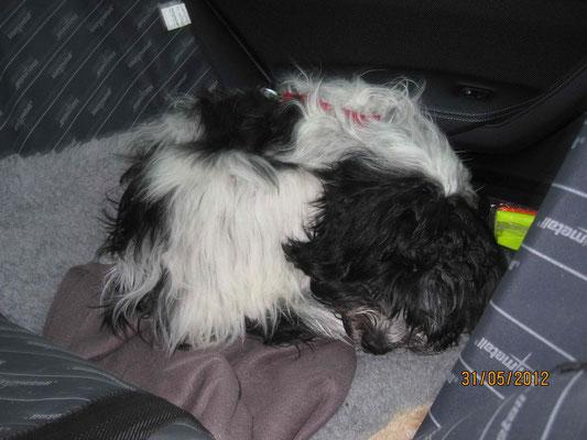 ... Ich weiß nicht, aber des Ausblick so von oben herab ist gut und es schläft sich hier genauso gut wie in dem alten Auto.
