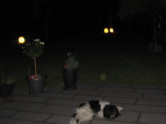 Meine Terrasse, mein Garten, meine Lichtkugeln!