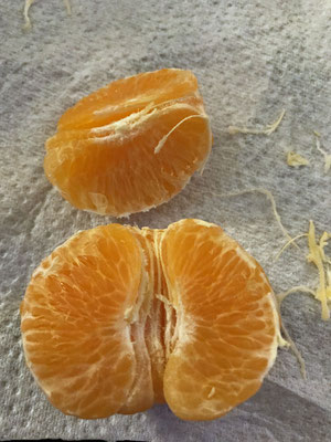 mein Highlight No. 1, Abends gibt es Clementinen: Herrchen pult und Frauchen fitzelt