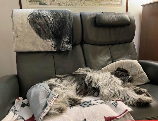 Zum Glück hat Herrchen mir zu Hause Platz auf dem Sofa gemacht, ...