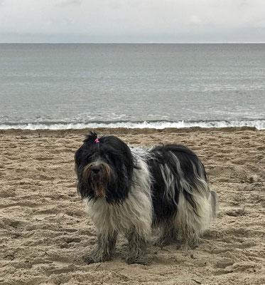 Das soll nun Ostsee sein: weit und breit nur Sand ...