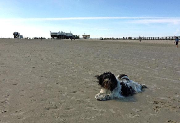 ... Wasser und Sand sind prima (ich muss ja im Haus nicht staubsaugen).