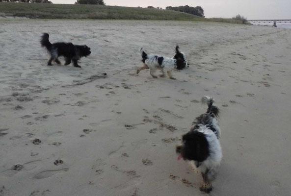 Am Strand haben wir noch 2 Doesje getroffen, da waren wir schon 6 (2 sind allerdings beim Bild entwischt).