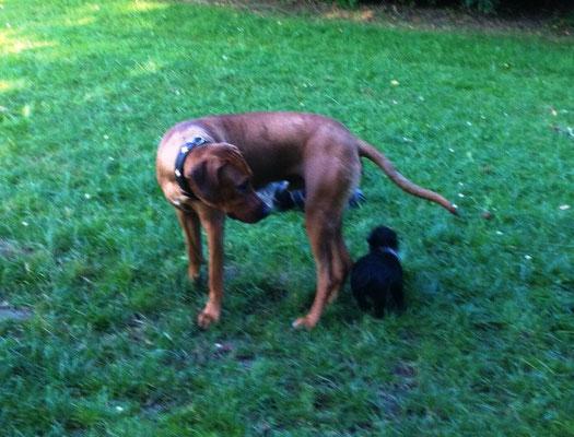 Jacko und Nala verstehen sich trotz des Größenunterschiedes gut.