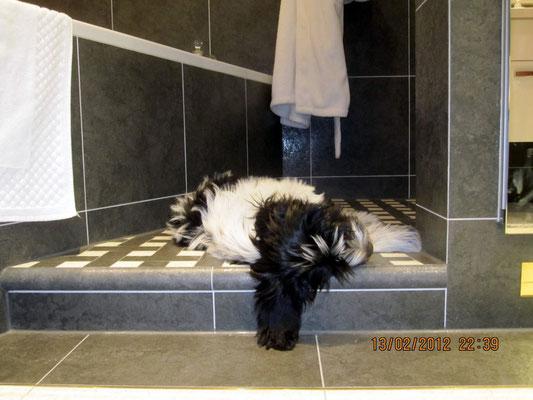 Mein neuer Lieblings-Schlafplatz ist in der Dusche. Ich muß nur immer aufpassen, daß niemand das Wasser aufdreht.