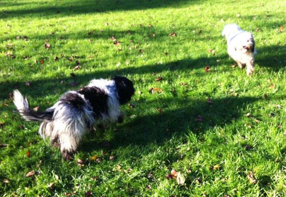 Ich habe mich mit meinem Freund Ernie in der Feldmark getroffen.