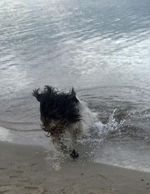 ... im Wasser, ...