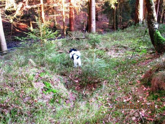 Ich bin im Wald. Ich sehe mein Herrchen, seht Ihr ihn auch?