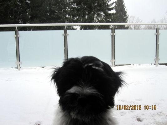 Ich habe mal wieder auf dem Balkon nachsehen wollen, ob Alles in Ordnung ist. Da lag auch Alles voller Schnee. Ich dachte der gehört nur nach unten ins Parterre.