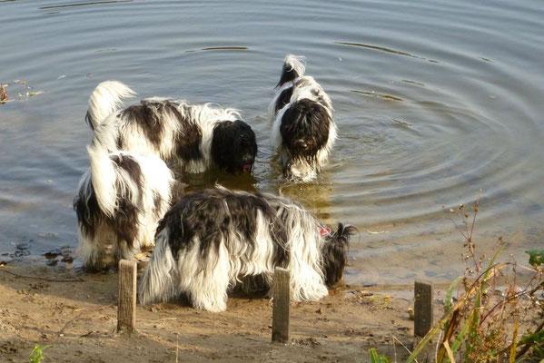 Mmmhh, Teichwasser ist lecker!