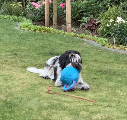 Abends hat Frauchen den blauen Ball mal wieder heraus gerückt.