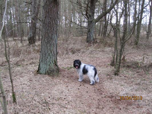 Wir haben uns mit Mama in einem tollen Wald getroffen ...