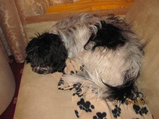Danach habe ich erst einmal eine Runde geschlafen. Ich liege fast ganz auf meiner Decke!
