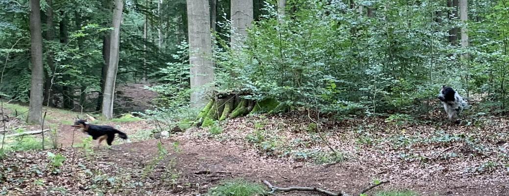 Wir haben uns super durch das Unterholz gejagt, ...