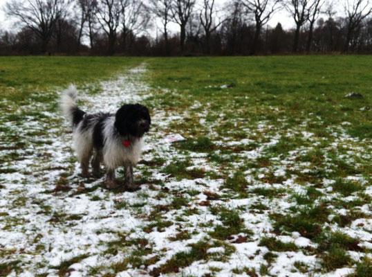 Endlich hat es geschneit, aber leider nur ganz wenig.