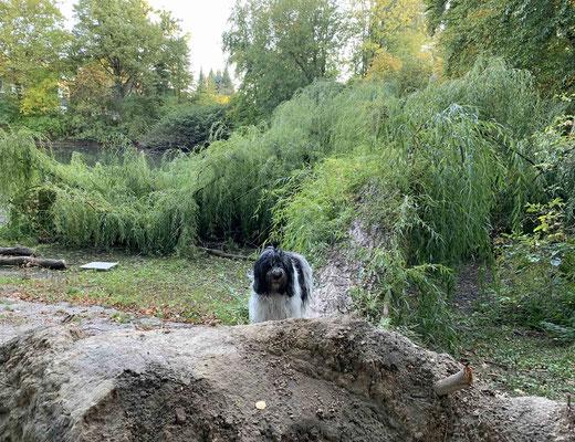 Ich bin auf den umgefallenen Baum im Park geklettert. Auf dem Rückweg hat mich ein Hund gebissen.