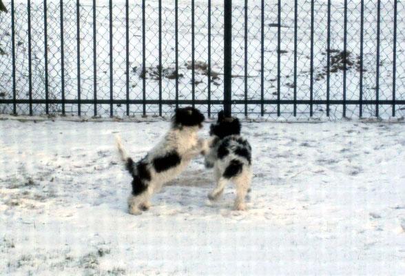 Hinter dem Zaun konnten wir erst einmal spielen und ...