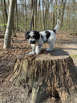 Nach dem Besuch bei der Tierärztin waren wir im Volksdorfer Wald.
