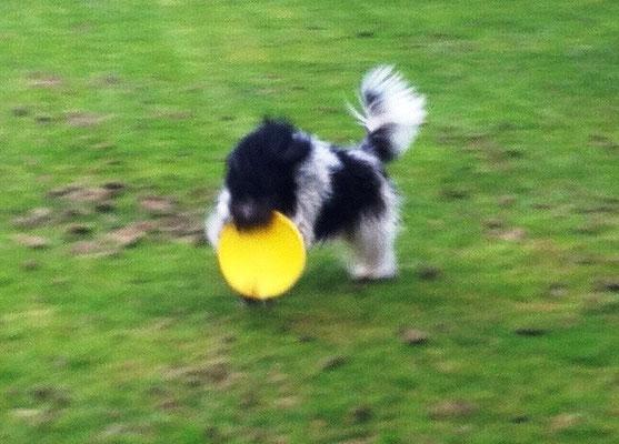 .. ich mit (geliehenem?!) Frisbee ...