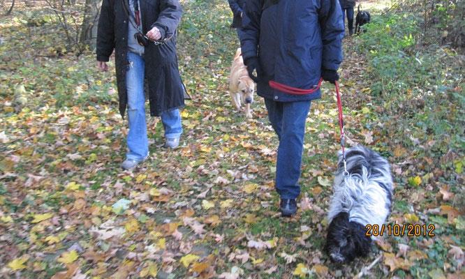Wir haben verschiedene Übungen gemacht. Hier sind Einige davon: Zuerst sind wir spazieren gegangen. Frauchen lief, wie vorgeschrieben, an (beinahe) lockerer Leine.