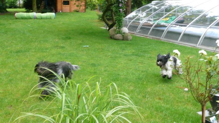 ... Garten, bis ...