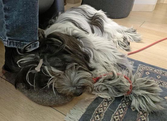 Auf Herrchens Schuh kann man wunderbar schlafen.