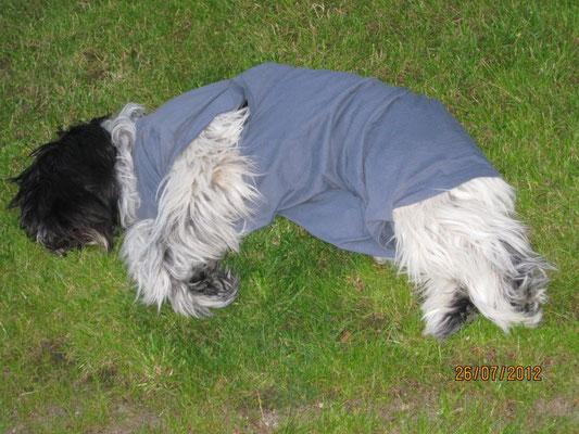 Frauchen hat mir ein T-Shirt zurecht genäht, damit durfte ich auch im Garten liegen.