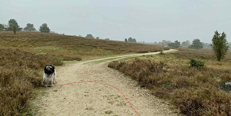 Tschüß Lüneburger Heide, bis zum nächsten Mal.