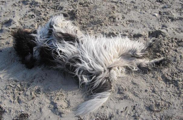 Kaum am Strand angekommen, habe ich mich erst einmal gewälzt ...