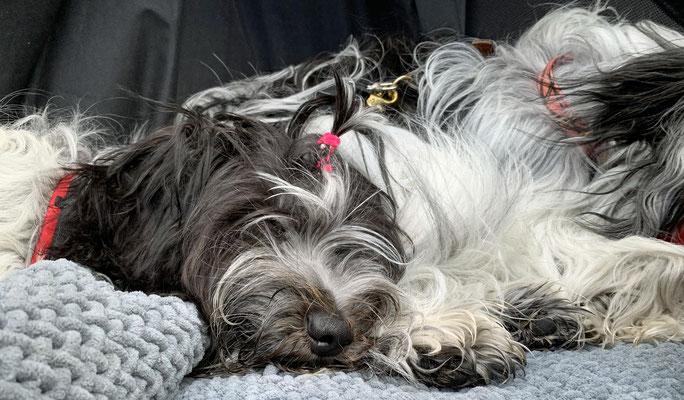 Auf der Rückfahrt haben wir geschlafen.