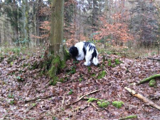 Wir waren neulich mal in einem ganz anderen Wald als sonst.