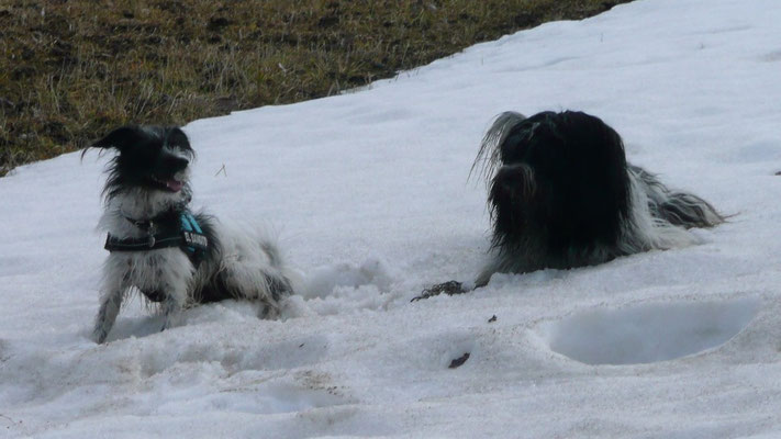 ... in den Schneeresten getobt.