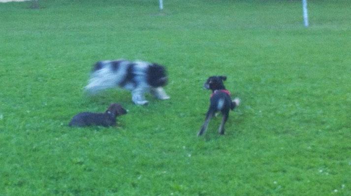... obwohl fast alle Hunde größer sind als Molly.